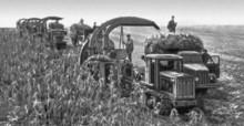 Уборка кукурузы в колхозе