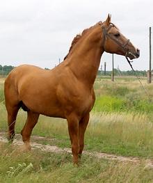 Image from www.equestrian.ru